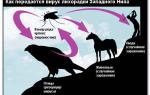 Лихорадка западного нила: характеристика инфекции, симптомы и течение, диагностика, лечение