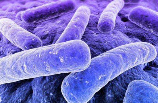 Палочка Коха: характеристики бактерии, патогенность, диагностика, лечение