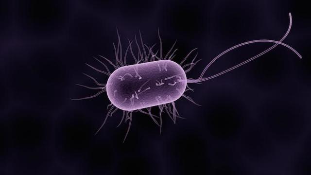 Возбудители инфекционных заболеваний: перечень наиболее распространенных