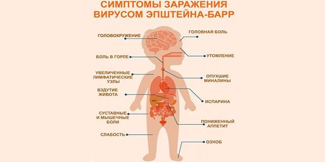 Вирус Эпштейна-Барр: заражение, формы, их симптомы и течение, лечение, у детей