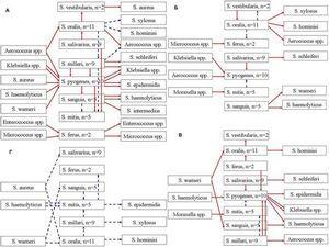 streptococcus mitis (Стрептококк митис): особенности, диагностика, лечение