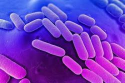 Клебсиелла: возбудитель и патогенность, заболевания и симптомы, лечение