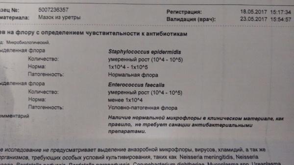 Энтерококк, enterococcus (faecalis, faecium, spp): свойства, диагностика, лечение