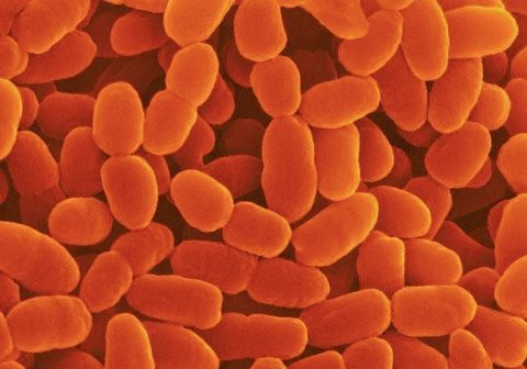 Мокрота в бронхах: возникновение и его факторы, виды и симптоматика, диагностика, терапия и выведение
