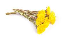 Мокрота: разбор от врача - от состава до цветов, типов и ассоциированных заболеваний