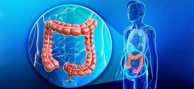 Иерсиниоз, иерсиния: развитие, симптомы, лечение и профилактика