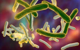 Микобактерия (туберкулеза и др), mycobacterium, микобактериоз