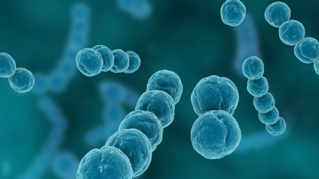 streptococcus agalactiae, стрептококк агалактия: что это норма, свойства, лечение