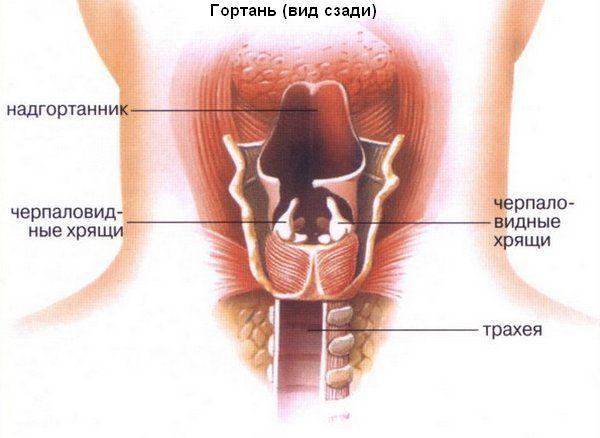Папиллома в горле, папилломатоз гортани: лечение, симптомы, причины