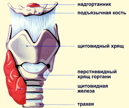 Стеноз гортани: как возникает, симптомы, тактика лечения по стадиям