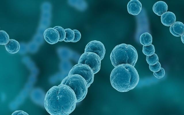 streptococcus viridans, стрептококк вириданс: норма и патология, свойства, лечение