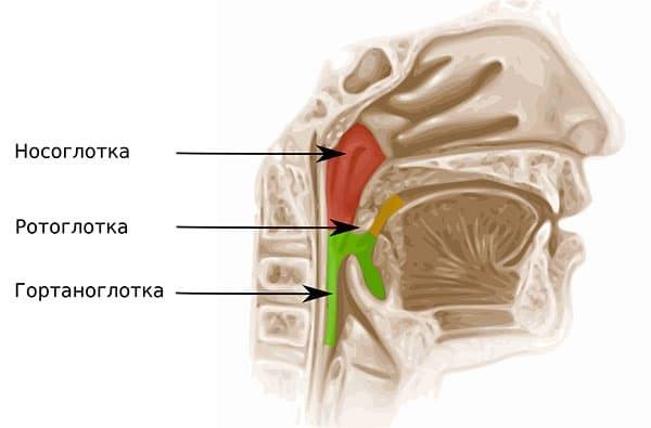 Рак гортани: формы, этиология, симптомы и диагностика, лечение, прогноз