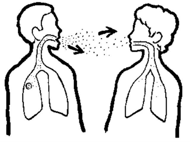Герпес в носу: иммунолог о возникновении, течении, лечении и профилактике