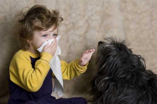 Поллиноз: провокаторы, патогенез, симптомы и течение, лечение