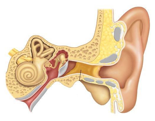 Симптомы и проявления болезней уха