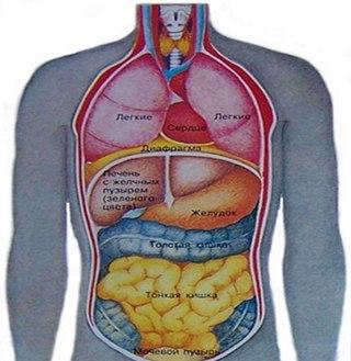 Причины кашля – симптомы и лечение спазмов груди