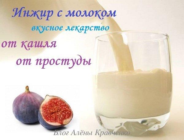 Инжир с молоком от кашля - как приготовить, рецепты