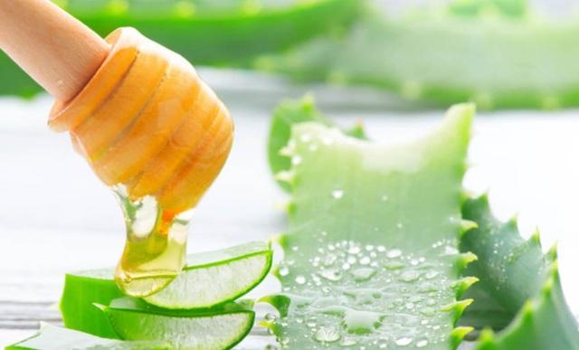 Алоэ с медом от кашля: польза, противопоказания и рецепты