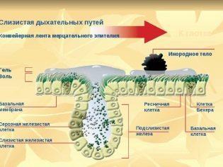 Сироп от кашля Флуифорт – показания к применению, свойства