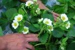 Цвет мокроты: зеленый, желтый, белый, черный, прозрачный