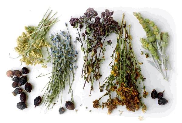 Травы от кашля для детей - какие можно применять